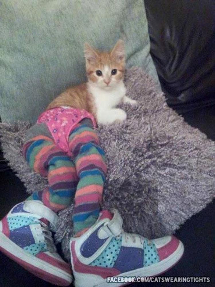 Gatos con medias es lo más grande (o peor) que puede suceder nunca