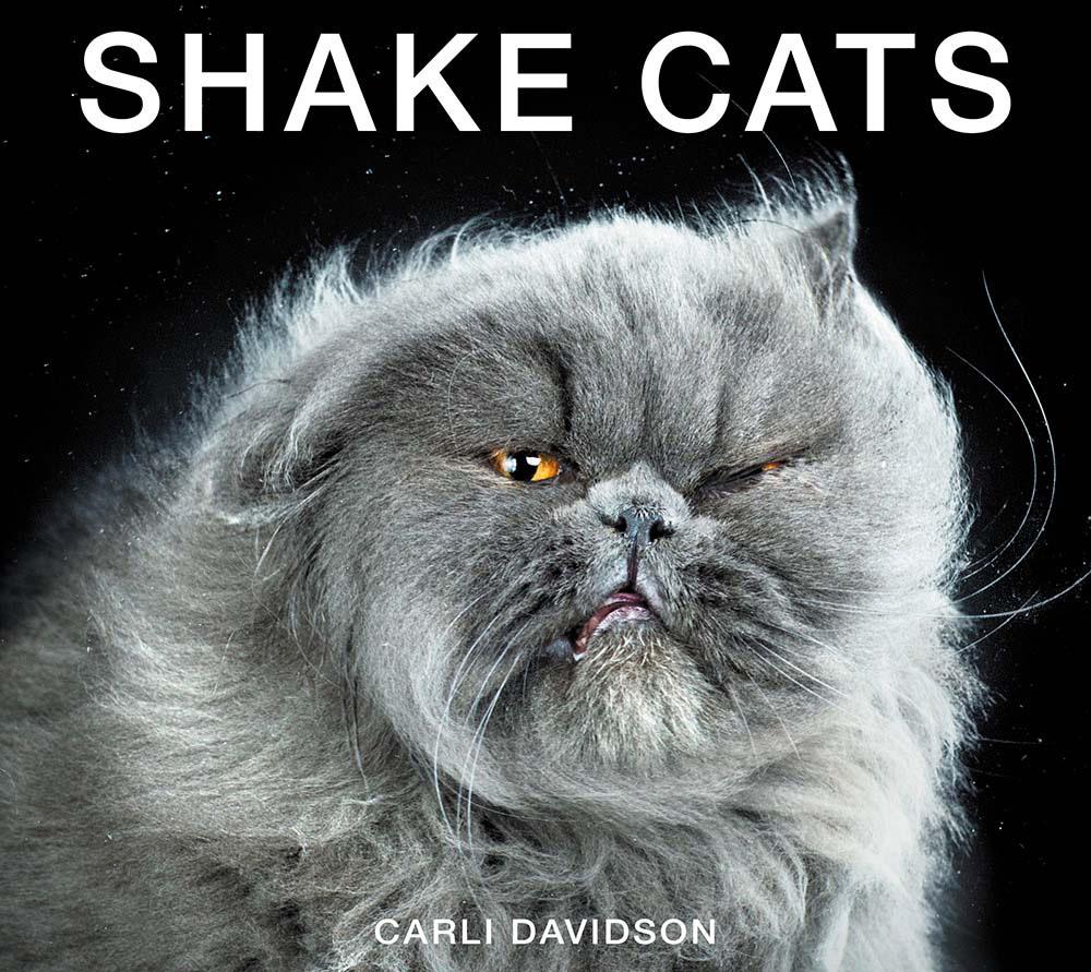 Divertidos retratos de gatos fotografiados cuando se están sacudiendo. ¡Preciosos!