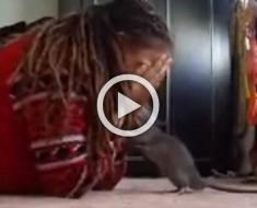 Esta chica juega al escondite con su... rata. ¡Su reacción es demasiado adorable!