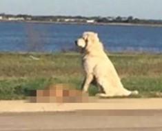 Desgarradora foto que captura la infinita lealtad de un perro. Esta es la historia...