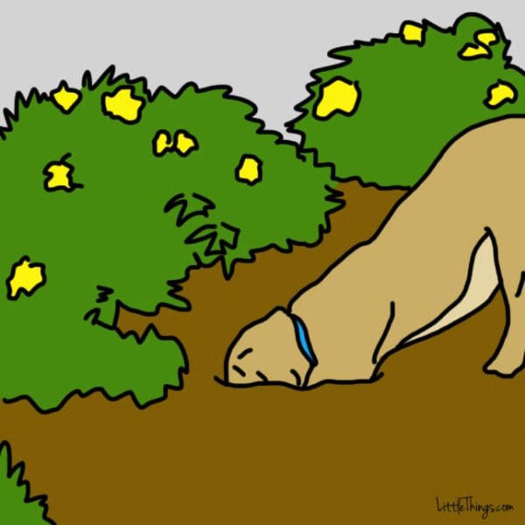 11 hermosas lecciones de vida que los perros están tratando de enseñarnos