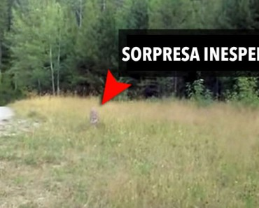 Mira como este excursionista recibe la sorpresa más inoportuna e inesperada - ¡Oh, Dios mío!