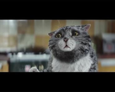 Este gato tiene un aspecto nervioso, y por buenas razones. Espera a ver los problemas en los que se ha metido