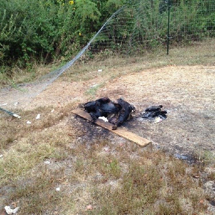Este hombre mató a un perro de la peor forma imaginable y ha sido multado con SÓLO 327 dólares
