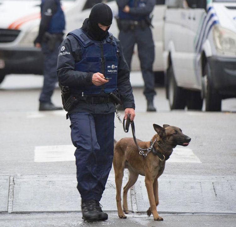 Esta perrita perdió la vida en París. Ahora el mundo la está saludando de una manera muy especial