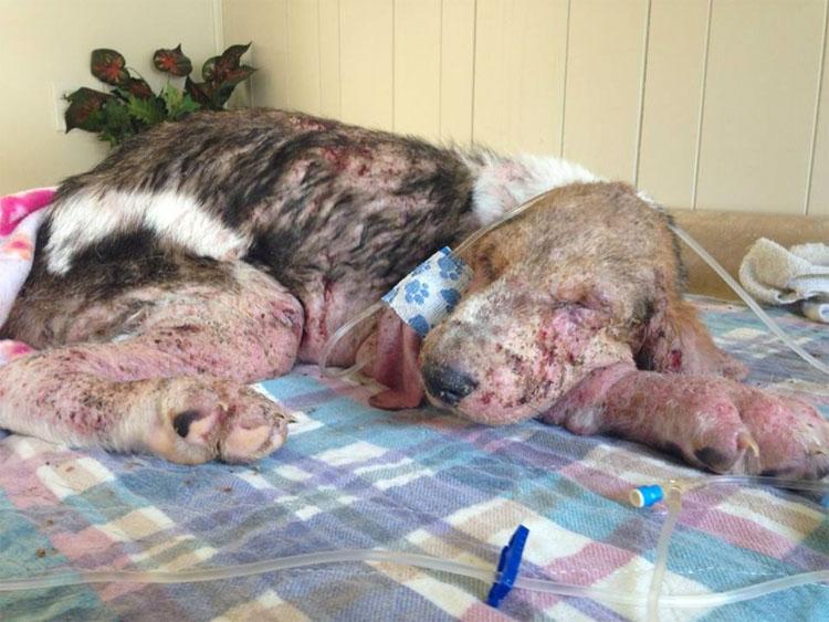 Este moribundo cachorro encontrado solo en un bosque tiene una transformación milagrosa