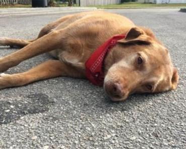 Este perro se niega a dejar de estar al lado de su dueña después de un trágico accidente