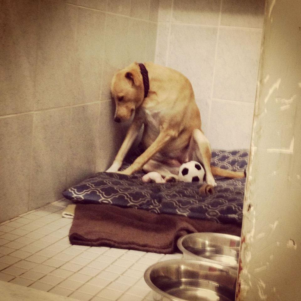 Este perro regresó a la perra que está tan triste que no puede ni caminar