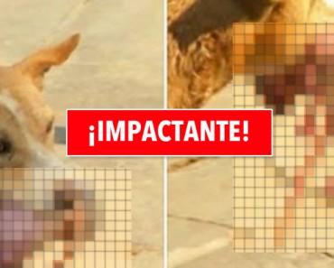 Perro callejero salva a un recién nacido arrojado a la basura. ¡Imágenes impactantes!