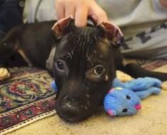 Le cortaron las orejas, pero no pudieron quebrar su espíritu
