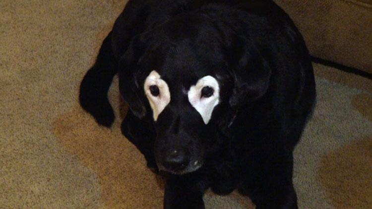 Este perro con una extraña afección ha pasado a ser aún más extraño