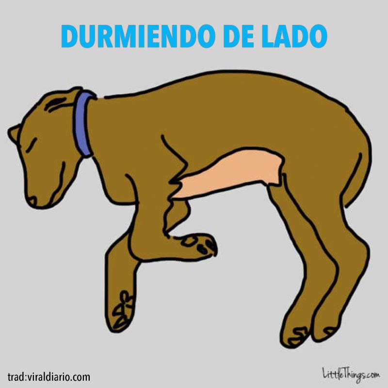 La posición en la que tu perro duerme revela secretos sobre su personalidad. ¡Fascinante!
