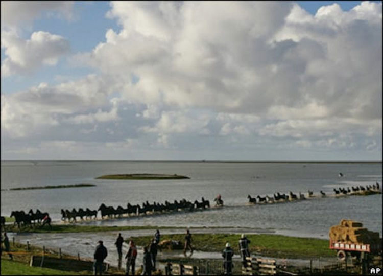 100 caballos se encuentran atrapados en una isla, entonces 7 mujeres hacen lo impensable...