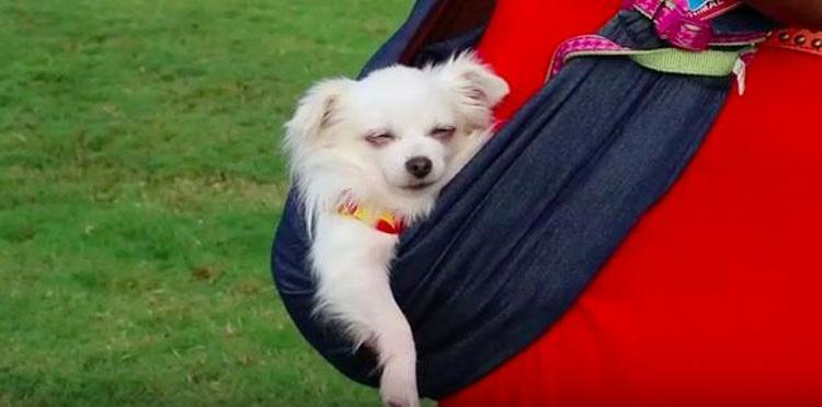 Si todo el mundo viera este vídeo, nadie compraría un cachorro de una tienda de mascotas