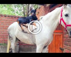 """Empezaron a llamar a este perro """"El susurrador de caballos"""". Cuando lo vi en acción no lo podía creer"""