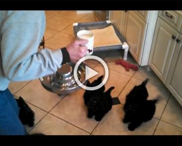 Estos cachorros no pueden esperar a tener un poco de leche. ¿Qué ocurre cuando la consiguen? ¡DIVERTIDÍSIMO!