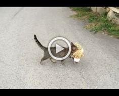 Un gato va a la casa del vecino para conseguir su juguete favorito y después HACE ESTO