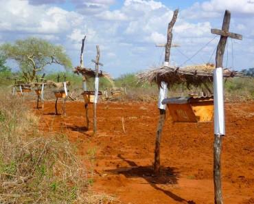 Agricultores africanos están poniendo filas de colmenas en sus tierras, pero NO es porque quieren miel 2