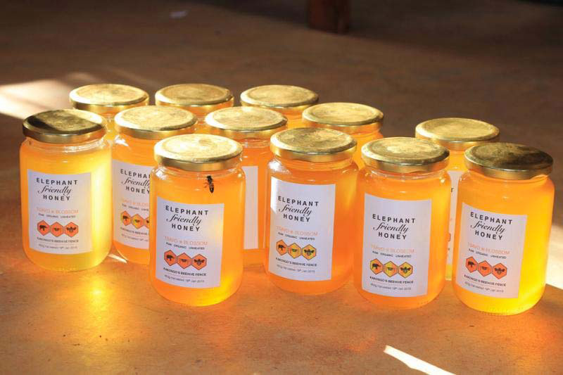 Agricultores africanos están poniendo filas de colmenas en sus tierras, pero NO es porque quieren miel