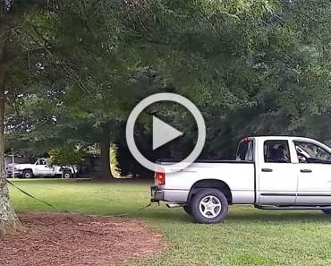 Su marido trata de arrancar un árbol gigante, ahora ATENCIÓN a lo que sucede. ¡VAYA SORPRESA!