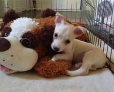 cachorro-ciego-1