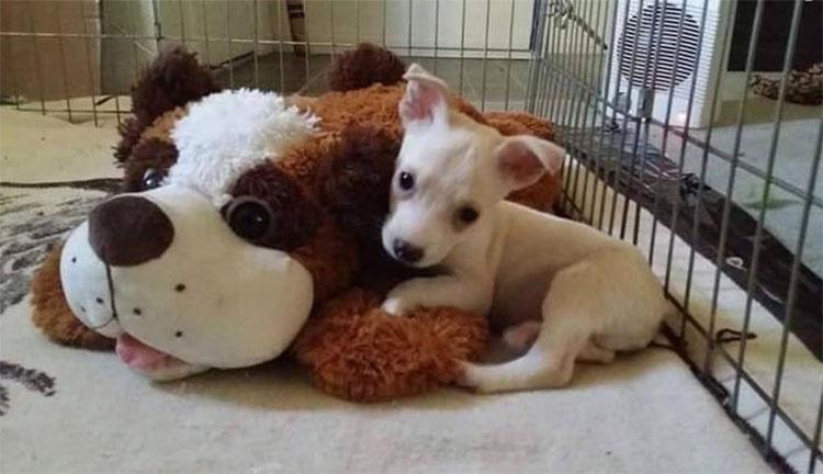 Este cachorro CIEGO que nadie quería supera su ansiedad de esta forma