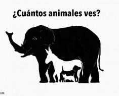 ¿Cuántos animales ves en esta imagen?