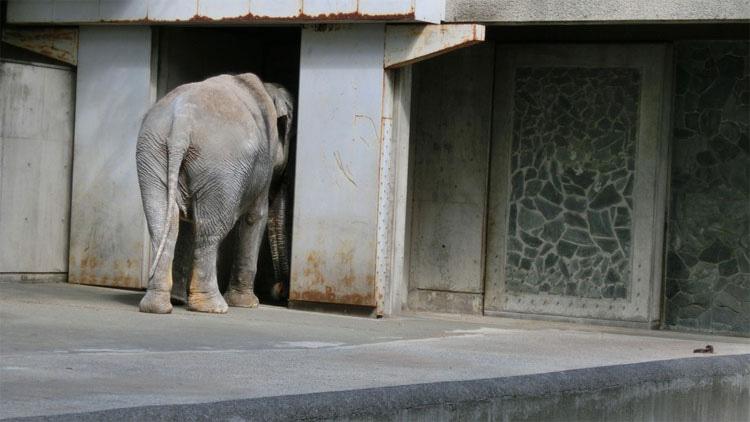 Este deprimido elefante ha estado viviendo ASÍ durante 61 años. ¡Esto debe ACABAR!
