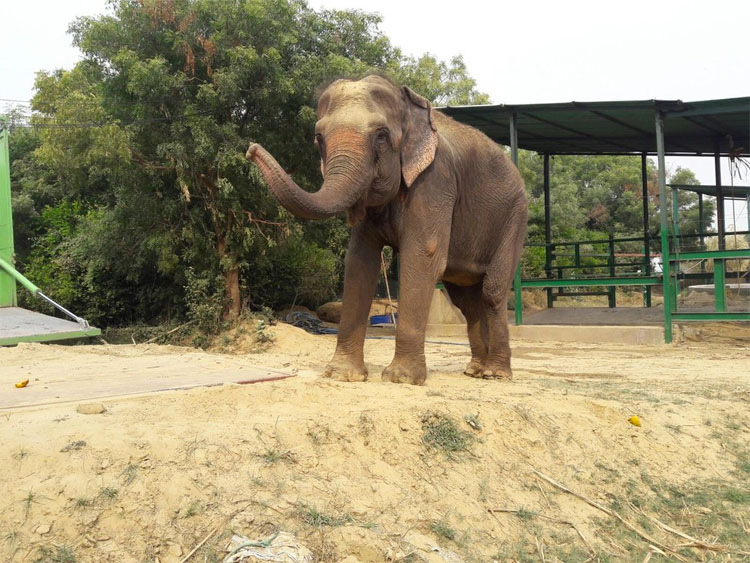 Mira la INMENSA alegría de esta elefanta de circo al saber que ella es finalmente LIBRE