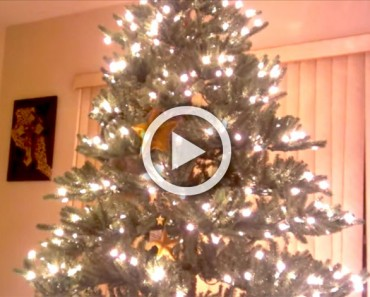 Parece un hermoso árbol de Navidad, pero mira un poco más de cerca... ¡Y acabarás riendo!