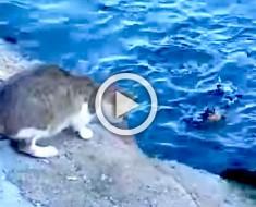 Este gato callejero no necesita que nadie le alimente... ¿Por qué? Atención al segundo 57