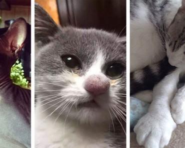 10 desafortunados gatos que aprendieron acerca de las abejas de la manera más difícil (e hilarante)