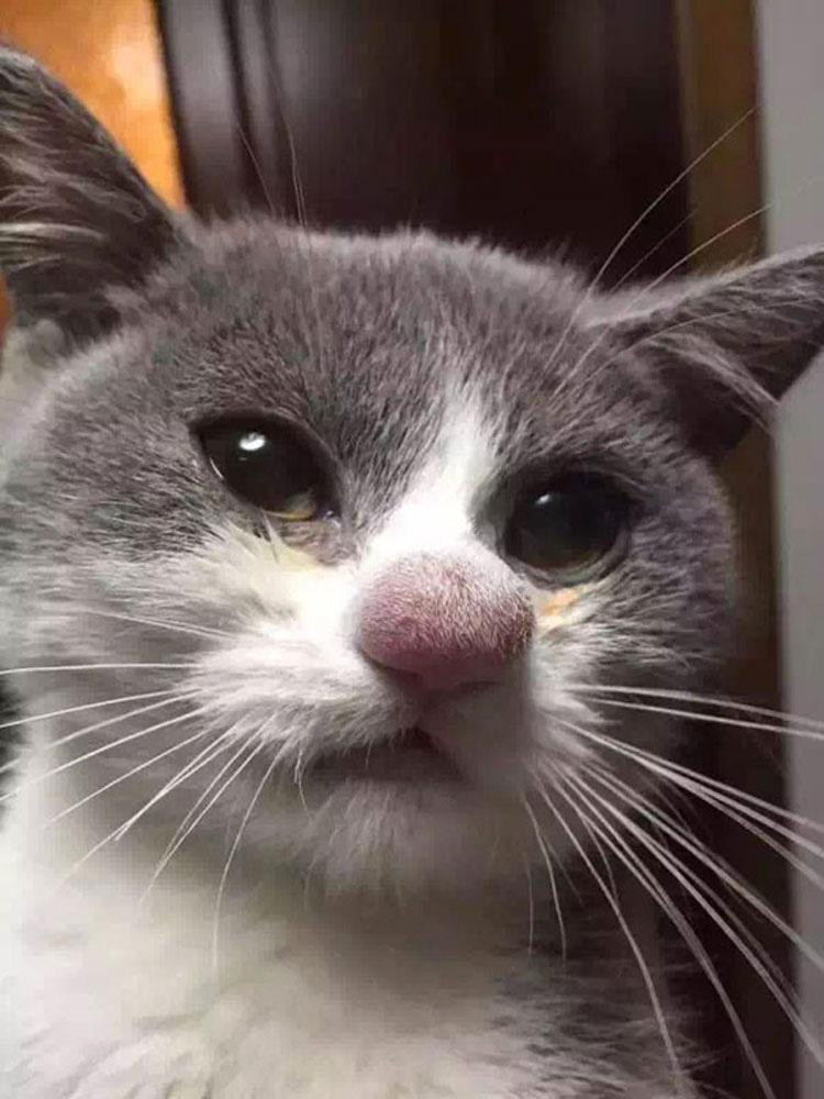 Estos desafortunados gatos aprendieron acerca de las abejas de la manera más difícil (e hilarante)