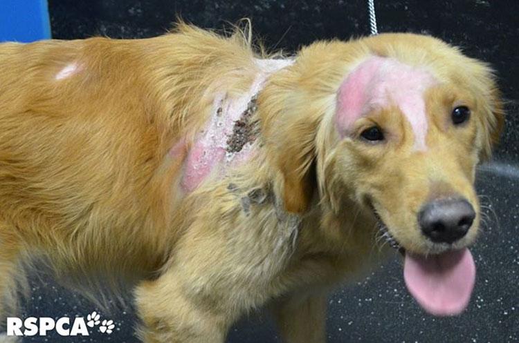 Las quemaduras de este perro se curan, pero su corazón roto nunca se recuperará