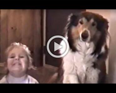 """Pidieron a este perro que dijera """"patata"""" al tomar una foto. ATENCIÓN a la expresión del perro"""