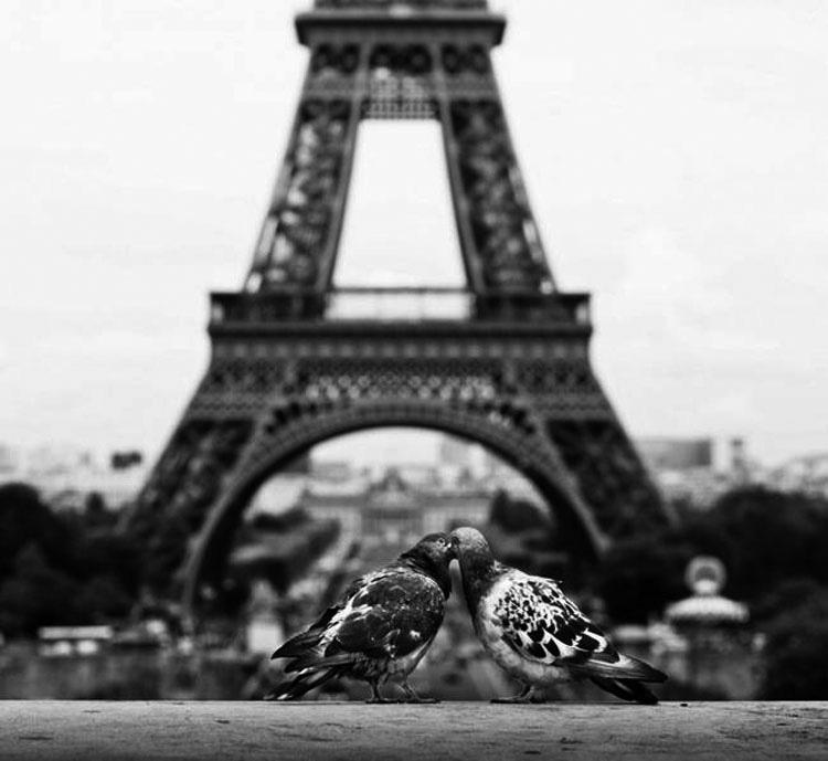 15 imágenes que prueban que el amor está en todas las partes