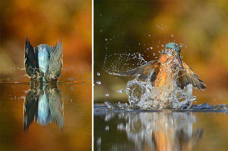 Después de 6 años y 720.000 intentos, este fotógrafo consigue finalmente la toma perfecta