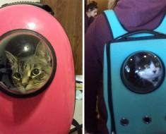 Esta mochila para gatos genial permite que su mascota viaje como un pequeño astronauta