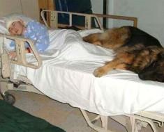 Oración de un perro, el poema que te romperá el corazón en 2 minutos