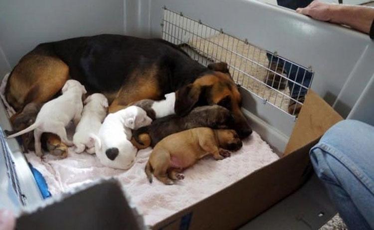 Rescatan a este pobre mamá de la eutanasia, ahora mira de cerca a sus cachorritos...