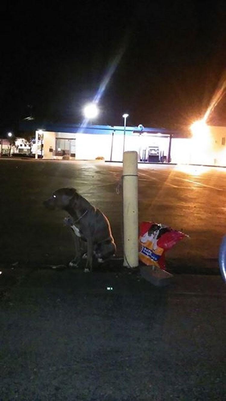 Este perro fue abandonado en el estacionamiento de una tienda con una bolsa de comida para perros