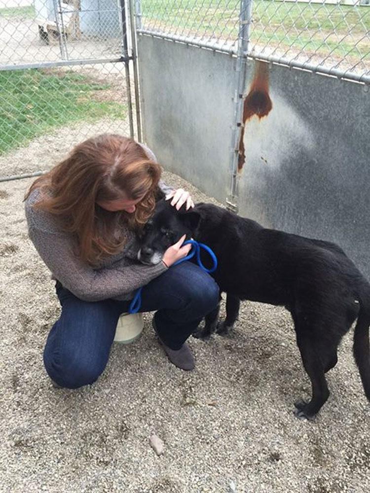 Este perro de 14 años no puede entender por qué fue abandonado en un refugio
