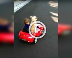 Mamá pilla a su bebé en el coche rojo. ¿Pero cuando se dan la vuelta? ¡Mira el perro!