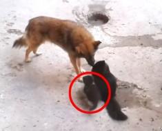 Esta madre trae a su gatito para que vea a un perro. Lo que sucede después es MARAVILLOSO