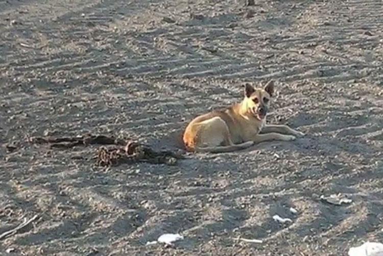 Fue encontrado en el desierto junto a algo tan trágico que el equipo de rescate acabó llorando