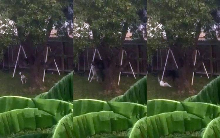 El perro horriblemente maltratado en aquel vídeo viral ha conseguido SALVARSE de su maltratador