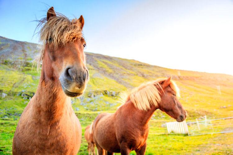 13 razas de caballos que parecen falsas, pero son 100% reales, ¡y hermosas!