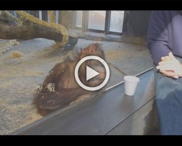 Este orangután tiene la reacción más divertida después de ver un truco de magia