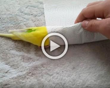 Cuando veas lo que este pájaro está haciendo, te emocionará hasta las lágrimas