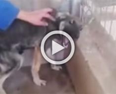 Este perro acaba de ser rescatado después de años de maltrato. Su reacción te romperá el corazón
